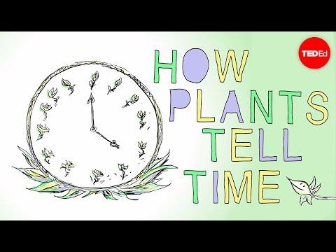 Video image: How plants tell time - Dasha Savage