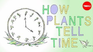 How Plants Tell Time - Dasha Savage