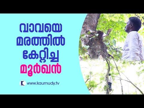 OMG ! The Cobra that forced Vava Suresh to climb tree | Snake Master EP 247 | Kaumudy TV