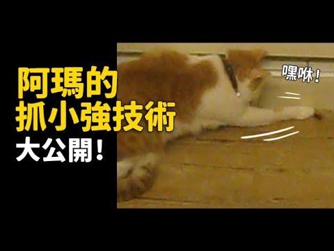 【阿瑪的抓小強技術大公開!】志銘與狸貓