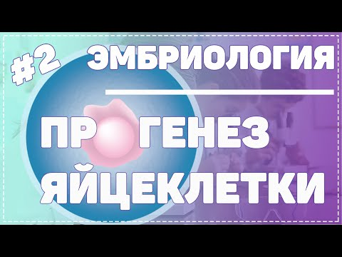 Яйцеклетка / Созревание яйцеклетки / ЭМБРИОЛОГИЯ