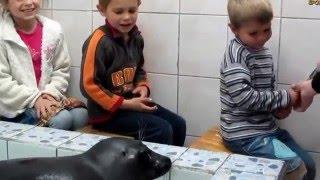 Семья Бровченко. Темин Д.р. - Поход в нерпинарий и поездка за подарком. (рел.)