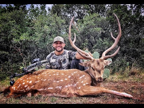 My First Spot And Stalk Axis Deer Hunt| Texas Free-Range
