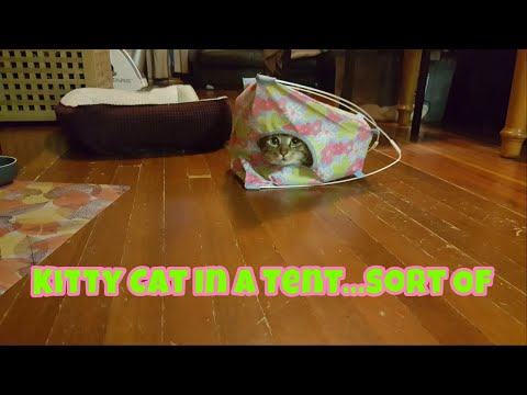Kitty Cat In A Tent...Sort Of.. ~ Our Other Adorable Pets 3 - VOL. 44