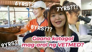 Timeline of becoming a Vet in the Philippines   Arah Virtucio