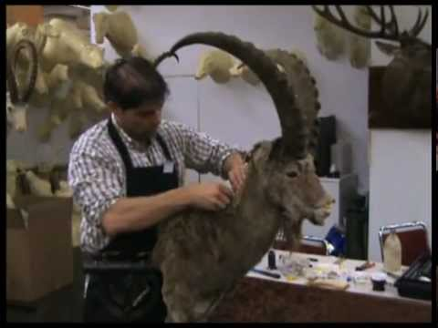 The Making of an Ibex