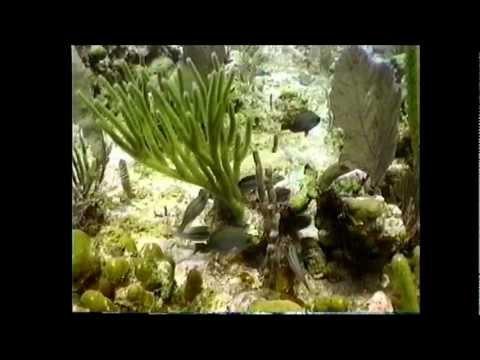 """Релаксация """"Подводный мир на Каймановых островах"""""""