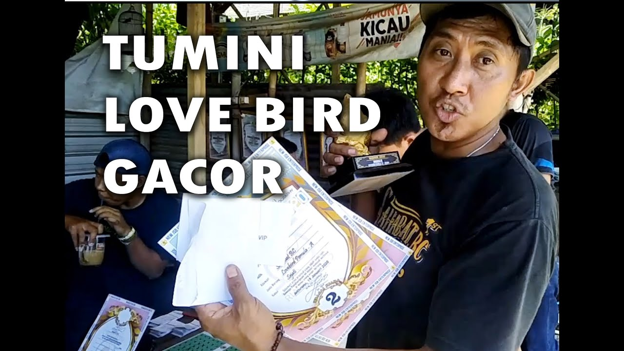 SI TUMINI LOVE BIRD GACOR