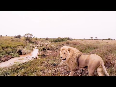 The Final Goodbye | The Lion Whisperer
