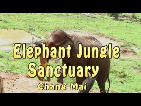 Elephant Junglel Sanctuary  3