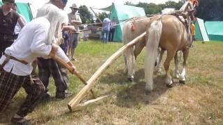 Archéologie expérimentale gauloise - araire attelée PORTES DE L'HISTOIRE