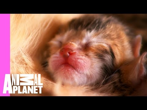 Watch These Playful Bengal Kittens Grow Up | Too Cute!