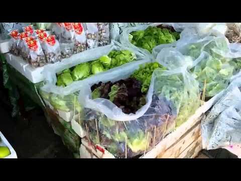 ตลาดไทยสามัคคี    วังน้ำเขียว   เที่ยวดูผักปลอดสารพิษ