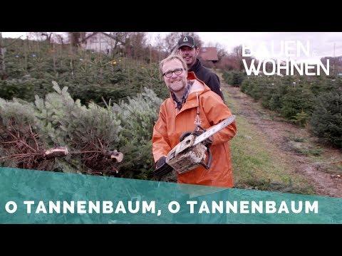 Reportage: Fällen im Akkord – Der Weihnachtsbaum in der Hochsaison
