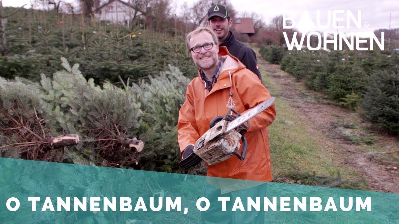 Weihnachtsbaum Fällen.Reportage Fällen Im Akkord Der Weihnachtsbaum In Der Hochsaison