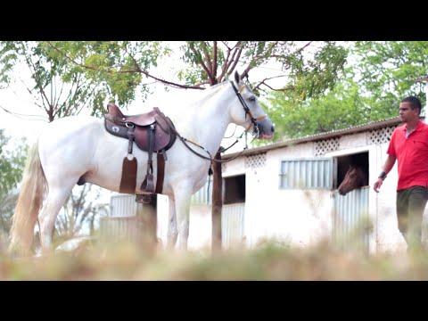 Se não existisse cavalo - Manoel Jr. & Forro Vaqueiro de Luxo 2017