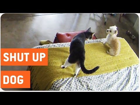 Cat Shuts Up Barking Dog | Cat vs Dog