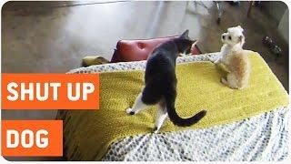 Cat Shuts Up Barking Dog | Cat vs Dog