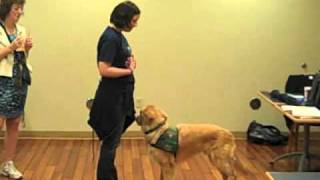 Memorial Therapy Dog Program: It Takes A Trained Team