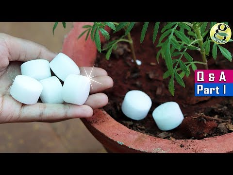5 SHOCKING GARDENING IDEAS AND SECRET QUESTIONS ANSWERED | Garden Tips