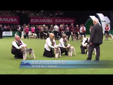 The Kennel Club Breeders Competition | Final Judging | Crufts 2014