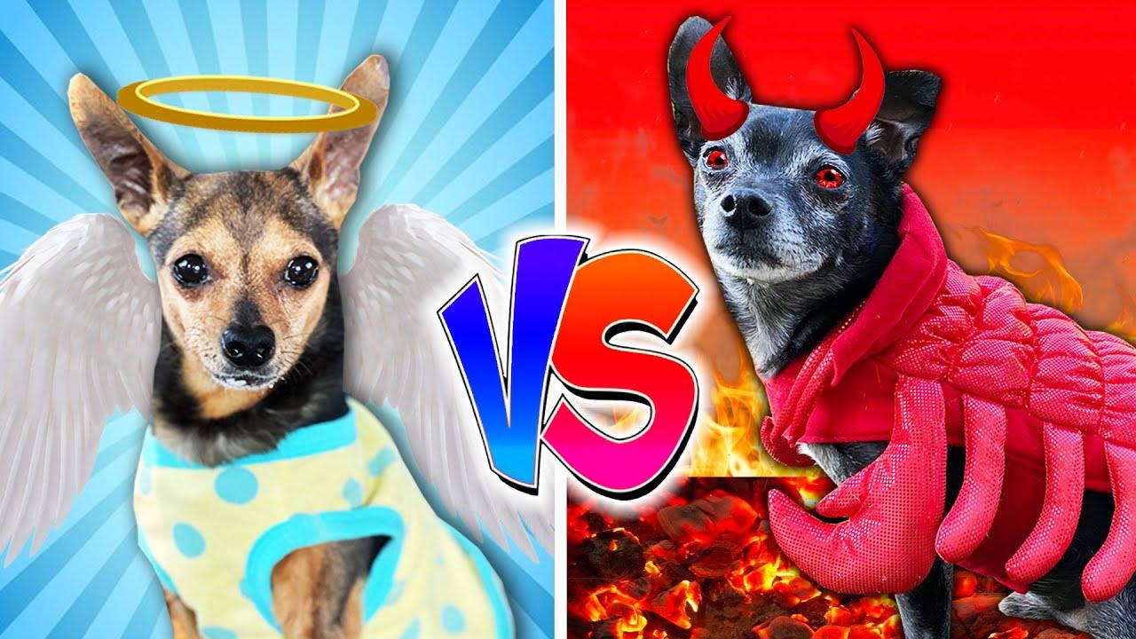 Good Dog Vs Bad Dog - PawZam Dogs