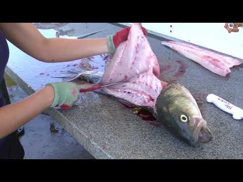How To Fillet A Rockfish (Striped Bass) - Dexter Outdoors