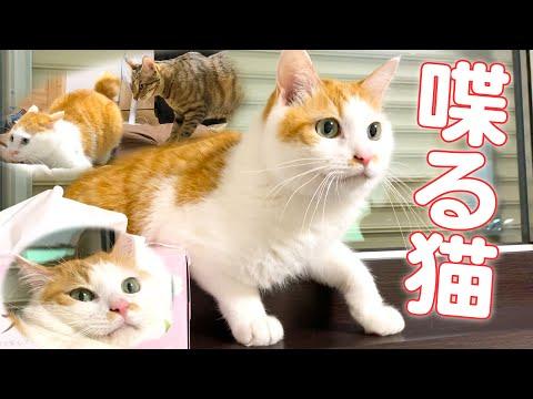 猫同士が猫語で会…