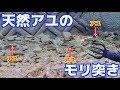 超透明な川で天然アユのモリ突きに挑戦! の動画、YouTube動画。