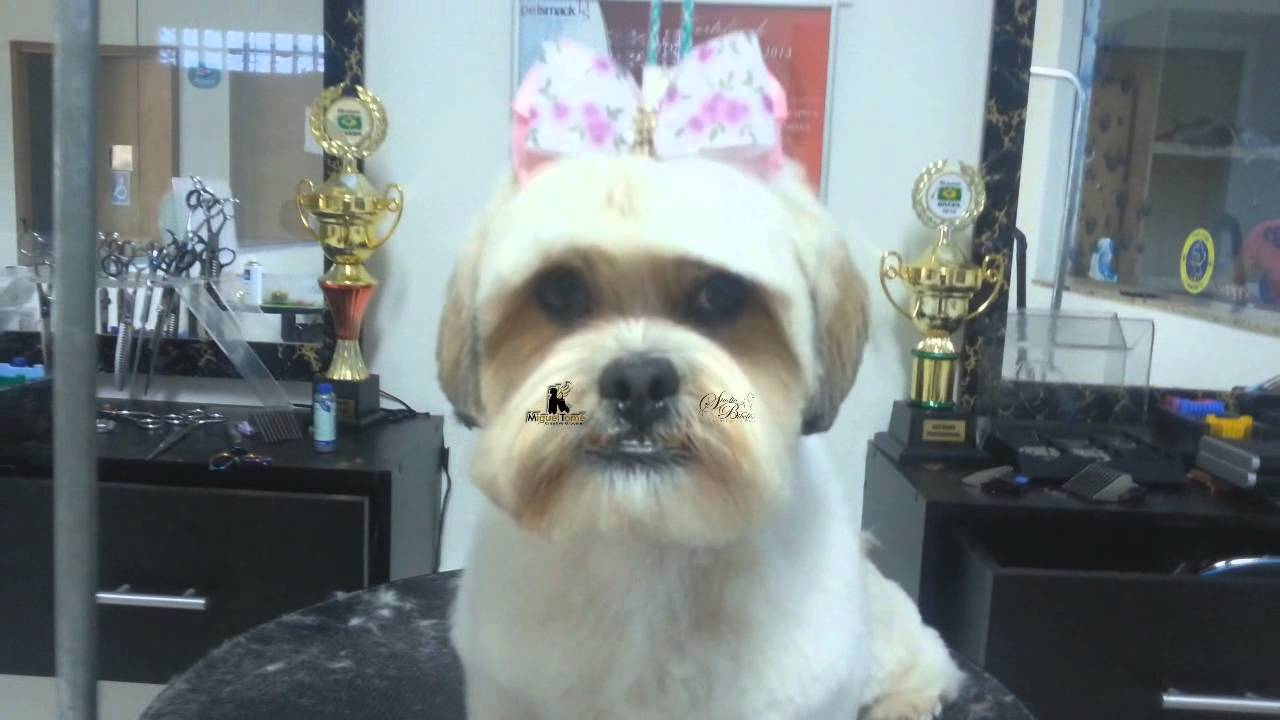 Grooming Face Lhasa Apso