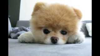 かわいい犬の画像を集めてみました。見ているととても癒されます。