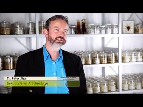 Senckenberg: Das Neue Forschungsinstitut