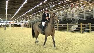 Le Salon du cheval met les jeunes cavaliers à l'honneur