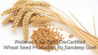 Wheat Seed Production - Sandeep Goel - www.agricultureinformation.com