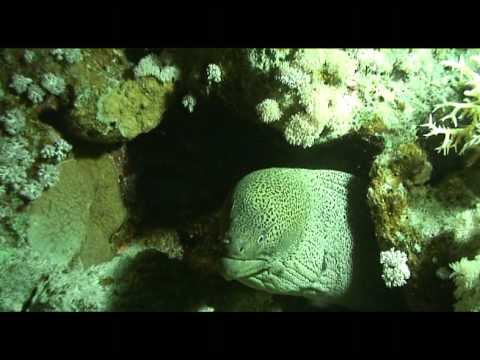 plongée de nuit Mer rouge Egypte