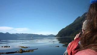 Humpback whales, kayaking at Glacier Bay Thumbnail