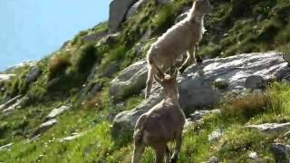 Wyprawa na Mont Blanc 4808 mnpm - Najwyższy szczyt Europy