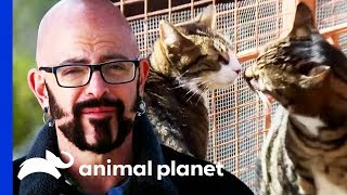 Cats Confined To A Small Room For 5 Years Learn To Socialize | My Cat From Hell