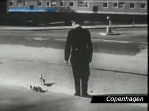 Copenhagen police helping ducks over street