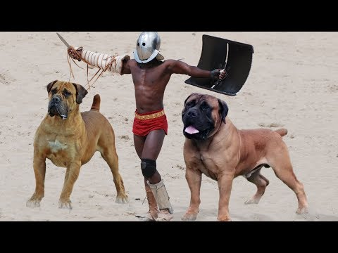 10 Most Powerful Mastiff Dog Breeds