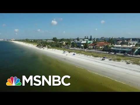 Climate Change Not As Polarizing Of An Issue In Florida | MTP Daily | MSNBC