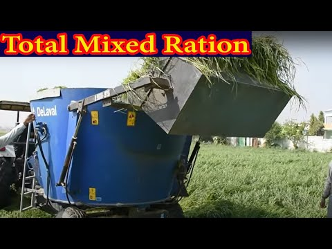 Use of Total mixed ration (TMR) machine at Barar Dairy Farm Punjab