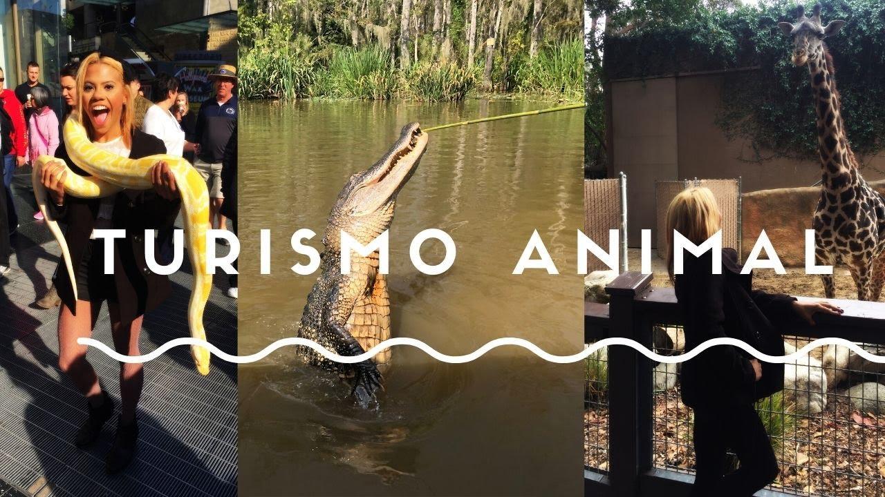 La oscura verdad  detrás del turismo  de vida silvestre.