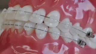 Стоматолог - ортодонт клиники