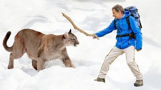 Times Humans Defended Themselves Against Wild Animals And Won!