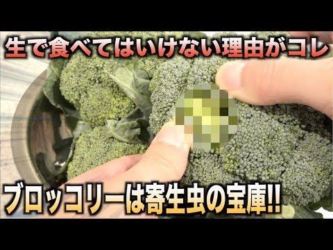 危険!!ブロッコリーを絶対生で食べてはいけない理由がわかる動画