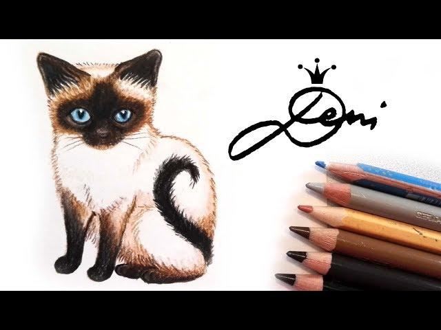 Siamesische Katze zeichnen ???? How to draw a Siamese Cat ???? Siam Kitten ???? ??? ?? ?????? ??????? ????