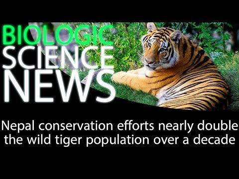 Science News - Nepal conservation efforts nearly double the wild tiger population over a decade