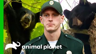 Game Wardens Help Stray Bears | North Woods Law