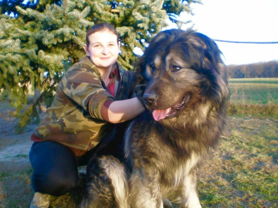 Big Russian Dog For Sale